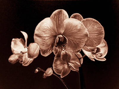 Photograph - Orchid Chrome by Christy Usilton