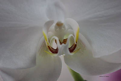 Photograph - Orchid Cloud by Deborah Hughes