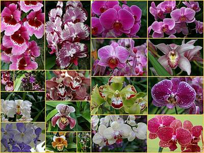 Photograph - Orchid Collage 2 by Allen Beatty