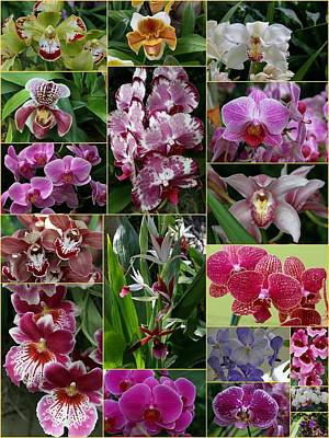 Photograph - Orchid Collage 3 by Allen Beatty