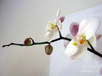 Art Print featuring the photograph Orchid Coming Out Of Painting by Barbara Yearty