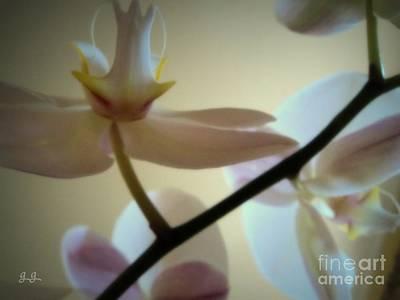 Photograph - Orchid Composition by Geri Glavis