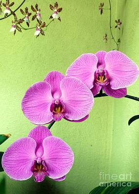 Photograph - Orchid Corner by Barbie Corbett-Newmin