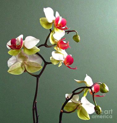 Photograph - Orchid Dance  by Deborah Johnson