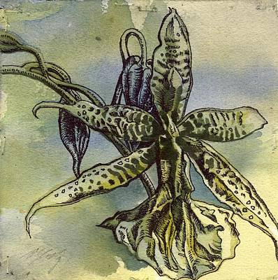Watercolor Mobile Painting - Orchid Drawing by Alfred Ng