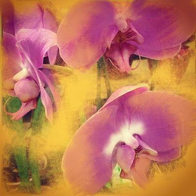 Florals Photograph - Orchid Dream by Go Inspire Beauty