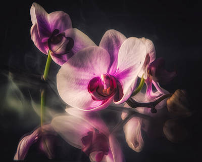 Orchid Dreams Art Print