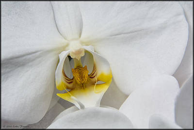 Photograph - Orchid by Erika Fawcett