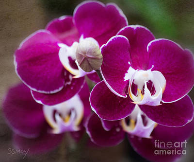 Photograph - Orchid Faces by Sally Simon