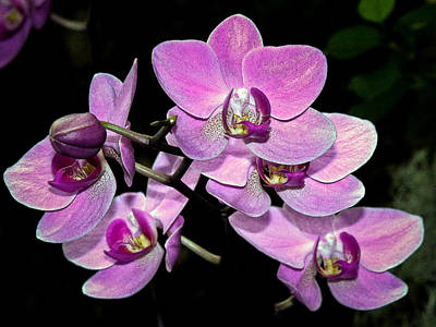 Photograph - Orchid Family by David Coblitz