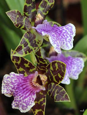 Orchid Five Art Print by Mark Steven Burhart