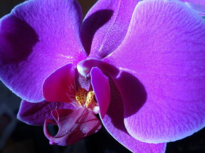 Photograph - Orchid From My Valentine by Amanda Balough
