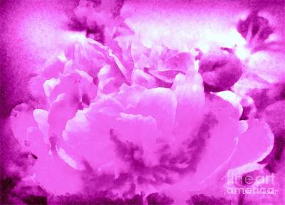 Photograph - Orchid Frost Peony by Janine Riley