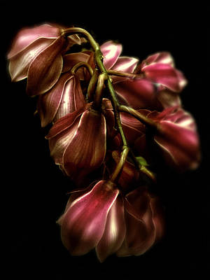 Orchid Digital Art - Orchid Glow by Jessica Jenney