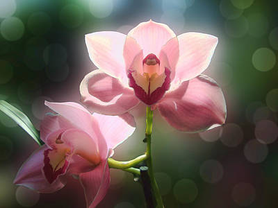 Photograph - Orchid Glow by Kathleen Holley