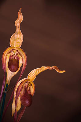 Photograph - Orchid Greeting by Kasandra Sproson