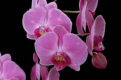 Photograph - Orchid I by Patrick Boening