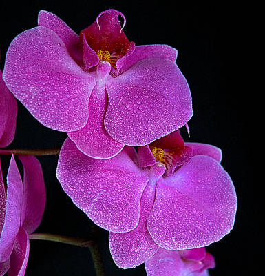 Photograph - Orchid II by Patrick Boening