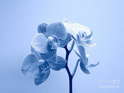Photograph - Orchid In Blue by Renee Trenholm