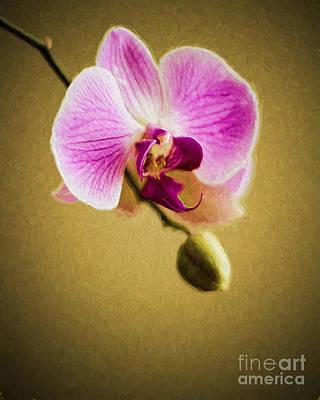 Orchid In Digital Oil Art Print