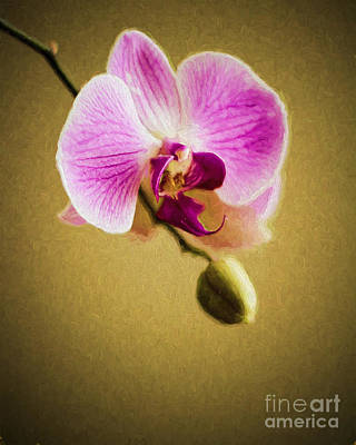 Photograph - Orchid In Digital Oil - Impasto by Ed Churchill