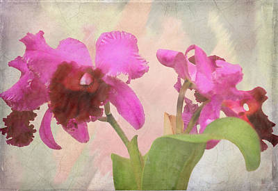 Orchid In Hot Pink Art Print by Rosalie Scanlon
