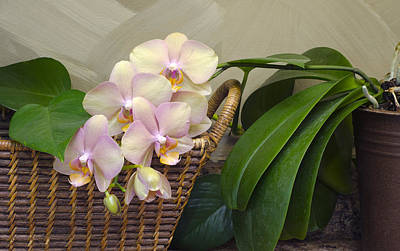 Photograph - Orchid In Our Kitchen by Lynn Hansen