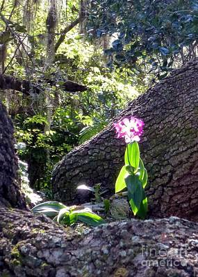 Photograph - Orchid In Tree 2 by Barbie Corbett-Newmin