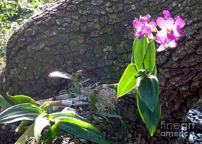 Photograph - Orchid In Tree by Barbie Corbett-Newmin