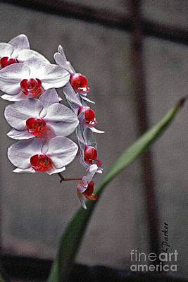 Orchid In Window Art Print by Linda  Parker