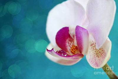 Orchid Jewel Art Print