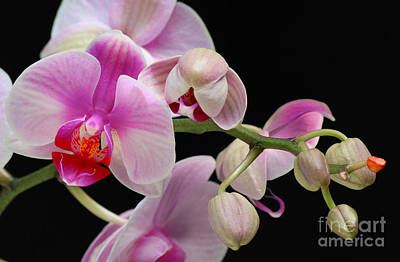 Art Print featuring the photograph Orchid by JRP Photography