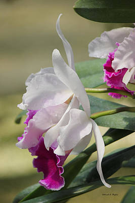 Photograph - Orchid Lace by Deborah Hughes