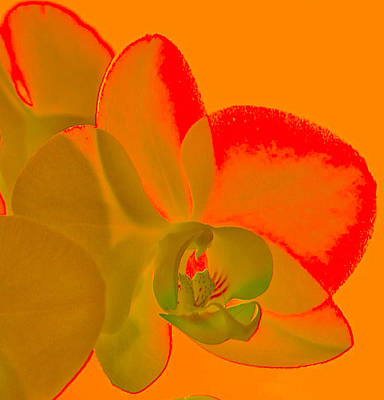 Photograph - Orchid Light by Terry Cosgrave