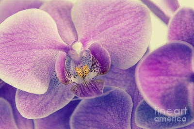 Orchid Lilac Dark Art Print by Hannes Cmarits