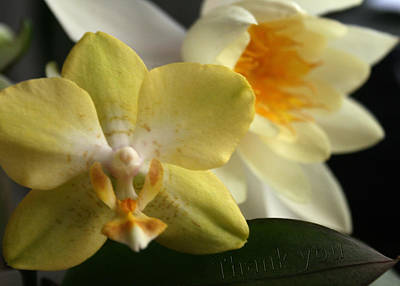 Lilies Photograph - Orchid Lily  And A Reminder To Utter The Words Thank You.  by Raenell Ochampaugh