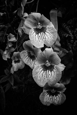 Photograph - Orchid Line by Ben Shields