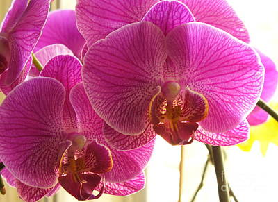 Art Print featuring the photograph Orchid by Lingfai Leung