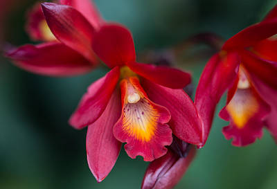 Photograph - Orchid Love by Dale Kincaid