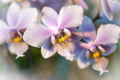 Photograph - Orchid Macro 3 by Jenny Rainbow