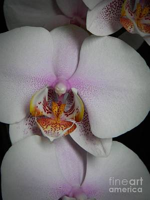 Neurotic Images Photograph - Orchid Macro by Chalet Roome-Rigdon
