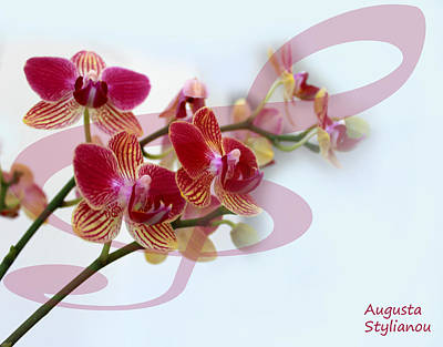 Orchid Music Art Print by Augusta Stylianou