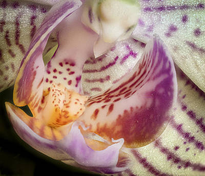 Photograph - Orchid Mystery Bird by Jean Noren