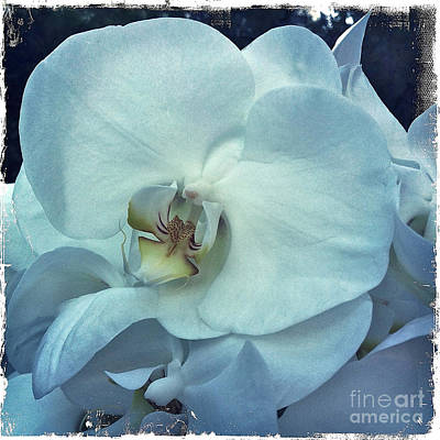 Orchid Art Print by Nina Prommer