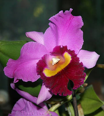 Orchids Photograph - Orchid Nose 2 And A Reminder To Utter The Words Thank You. by Raenell Ochampaugh
