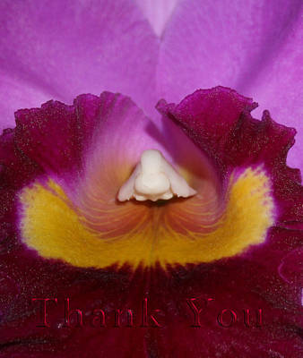 Orchids Photograph - Orchid Nose And A Reminder To Utter The Words Thank You. by Raenell Ochampaugh