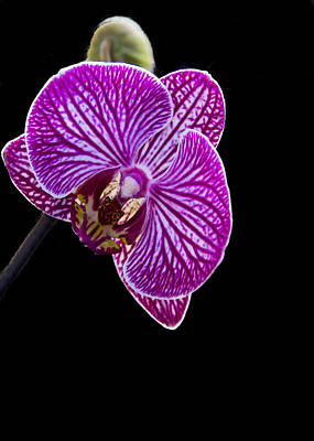 Photograph - Orchid On Black Background by Deb Buchanan