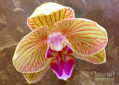 Orchid On Marble Art Print by Barbie Corbett-Newmin