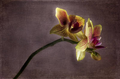 Photograph - Orchid On Purple Background by Wayne Meyer