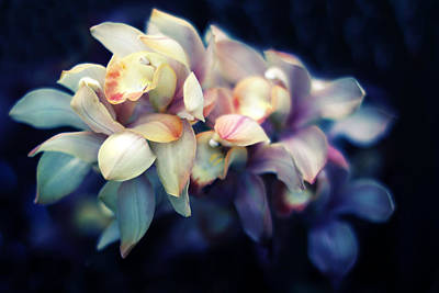 Violet Photograph - Orchid Petals by Jessica Jenney